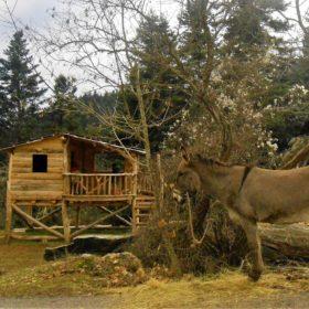 peloponnese kids greece elati donkey