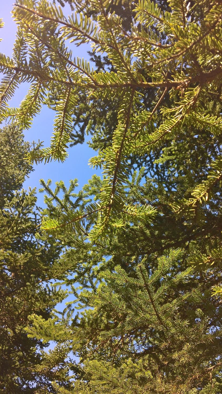 peloponnese kids greece fir trees