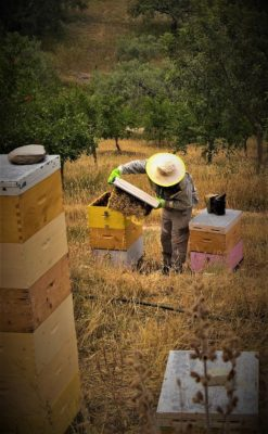 kids Greece beekeeping museum nafplio