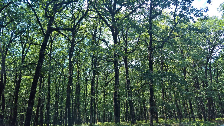 kids Greece foloi forest