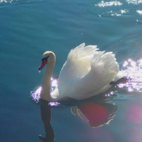 kids Greece Kastoria lake