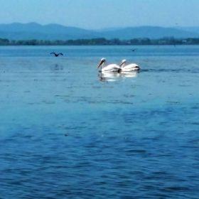 kids Greece kerkini lake