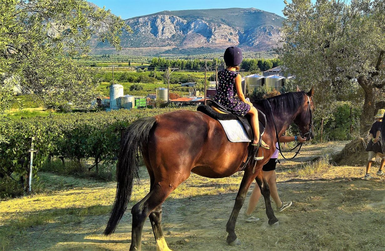 horse riding vineyards Greece kids