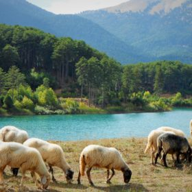 kids Greece sheep lake doxa
