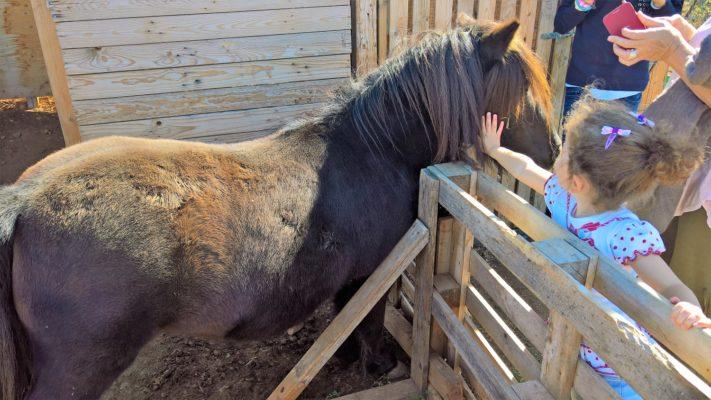 farm athens horse riding kids Greece