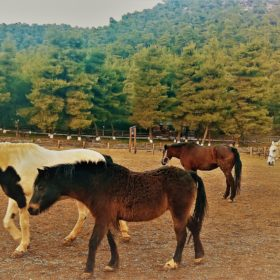 horse farm ranch Greece kids