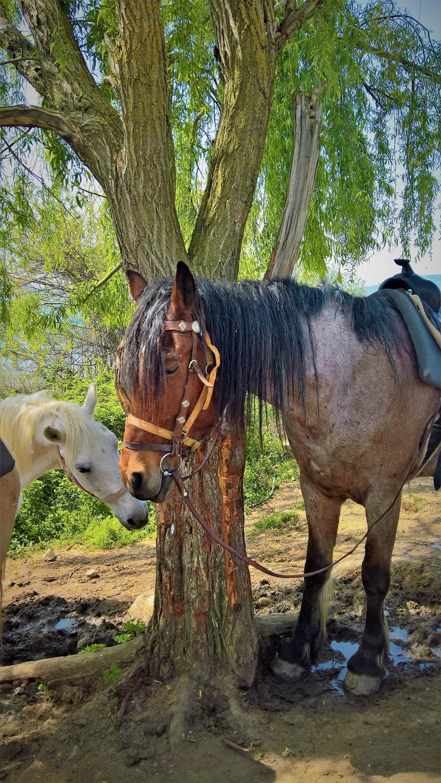 kids Greece kerkini lake horse