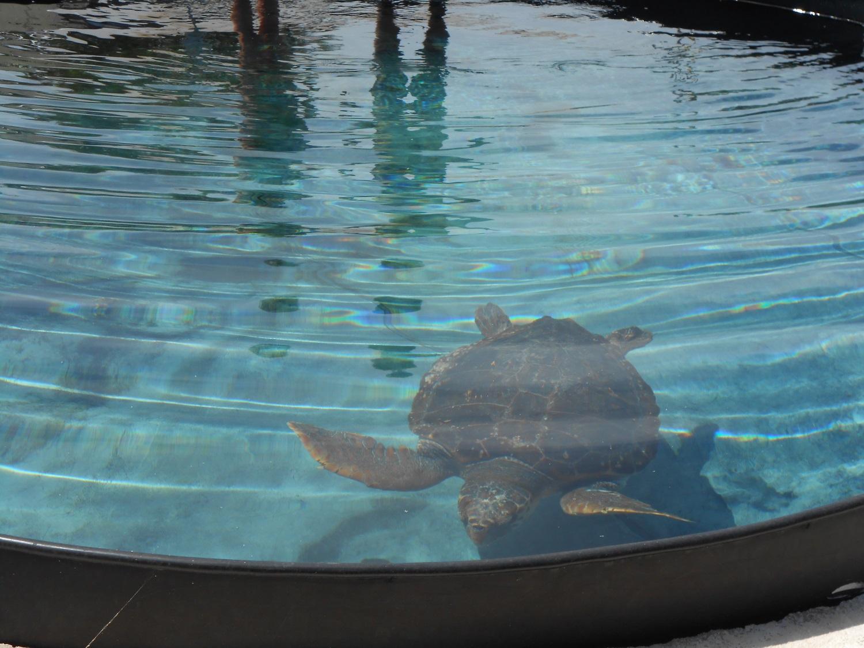 kids Athens protection sea turtle