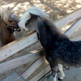park ponnies Greece kids