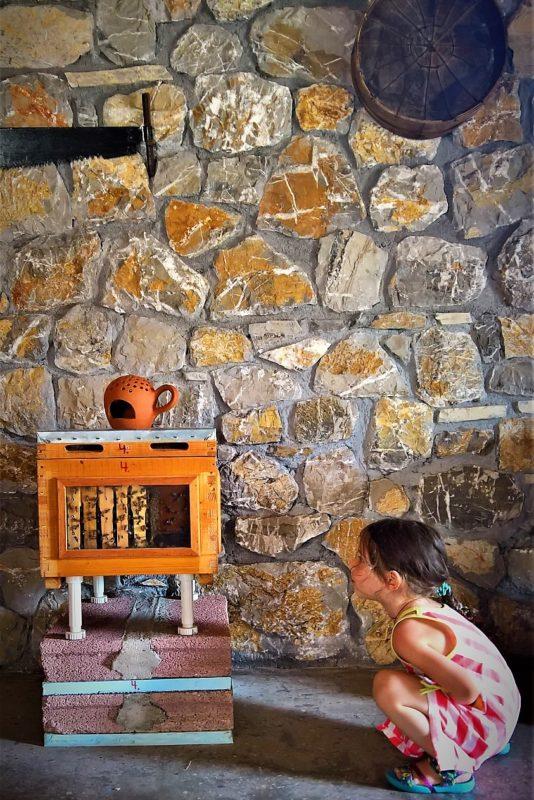 ermionis beekeeping