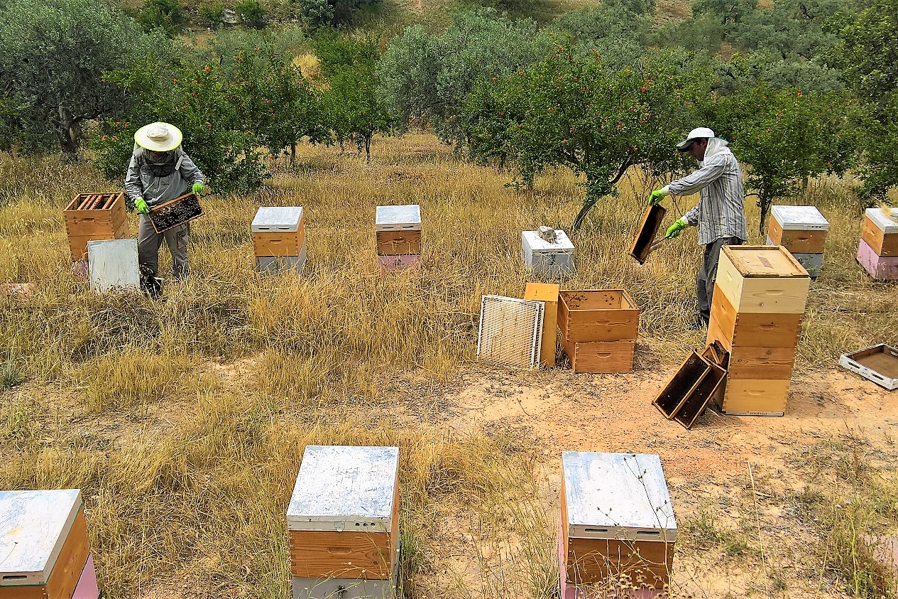 bee keeping ermionis argolis