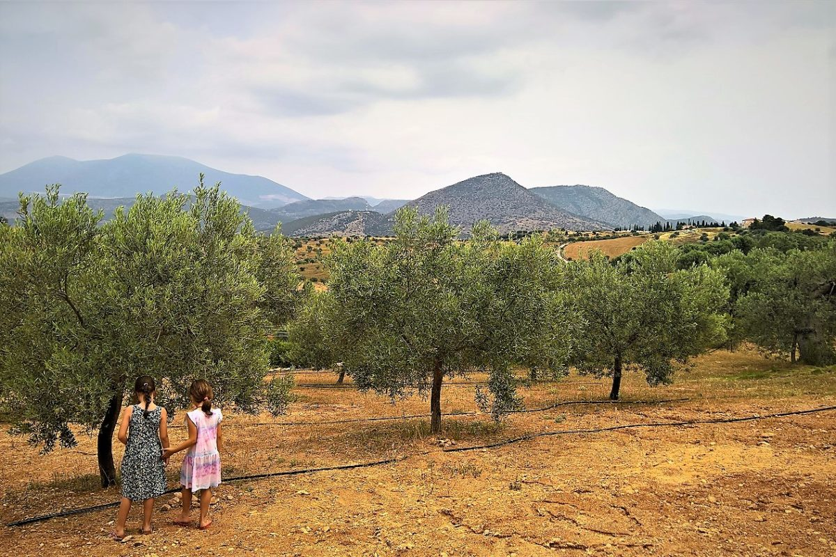 olive grove Ermionis kids