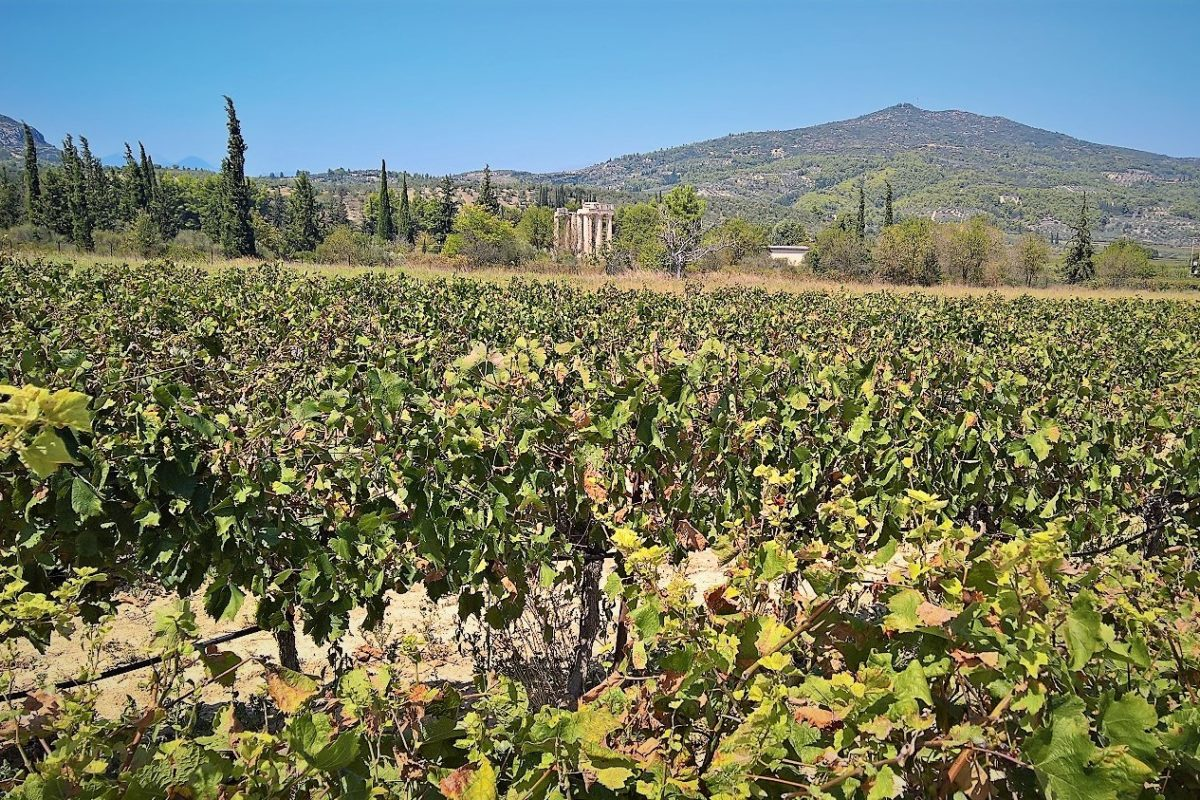anceint nemea vineyards Greece