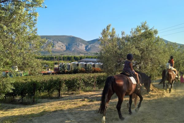 hores riding winery nemea kids