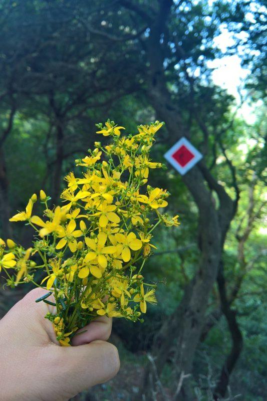 balsam menalon trail hiking