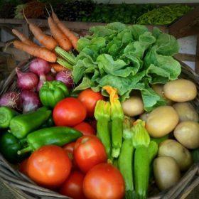 vegetables bio farm athens