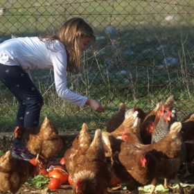 coq kids feeding farm