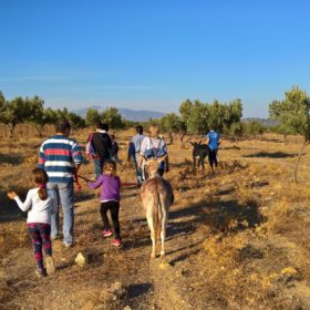 donkeyland athens greece kids walk