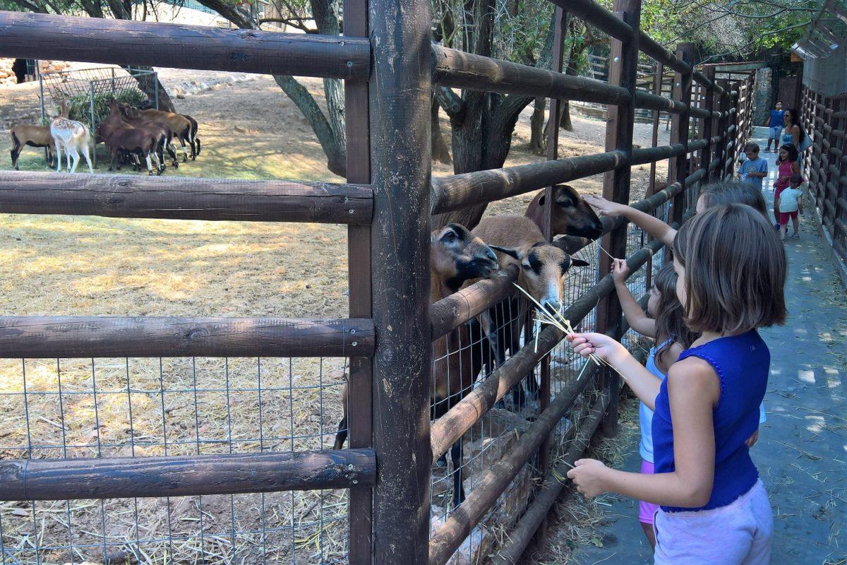 animals kids Greece farm