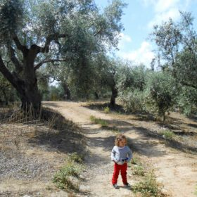 olive grove messenia messinia kids