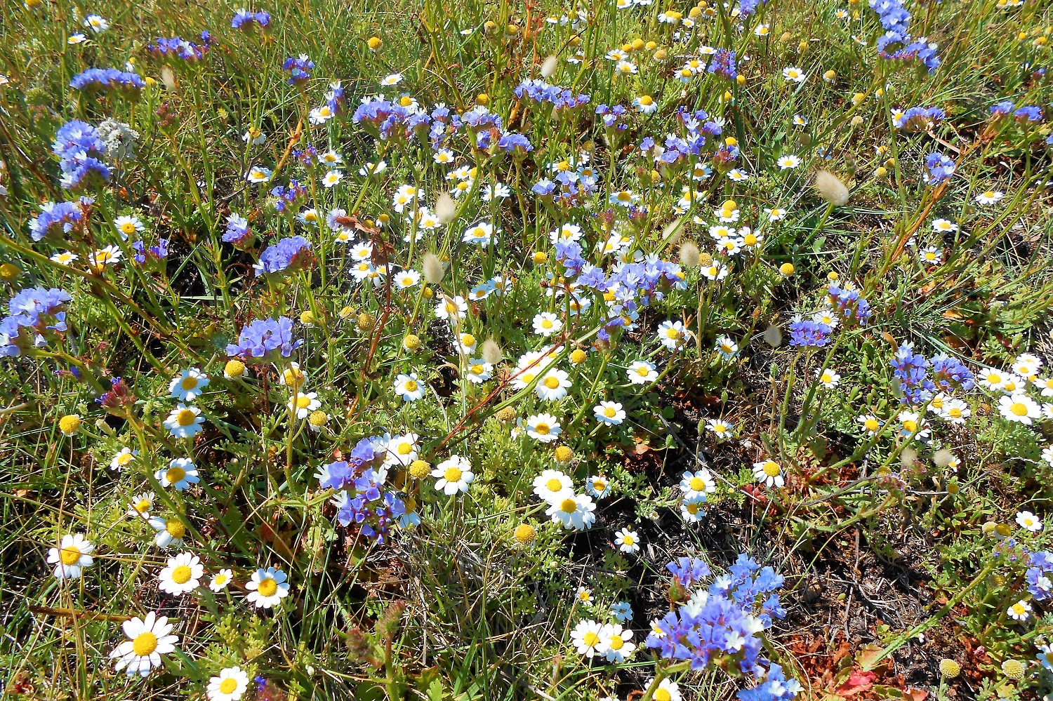 flowers messinia May