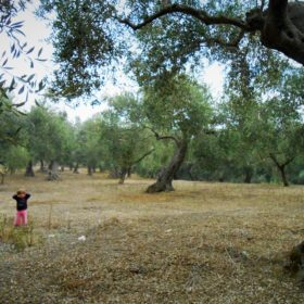 olive grove messinia historic tour kid
