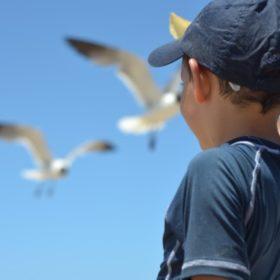 kid seagulls greece summer