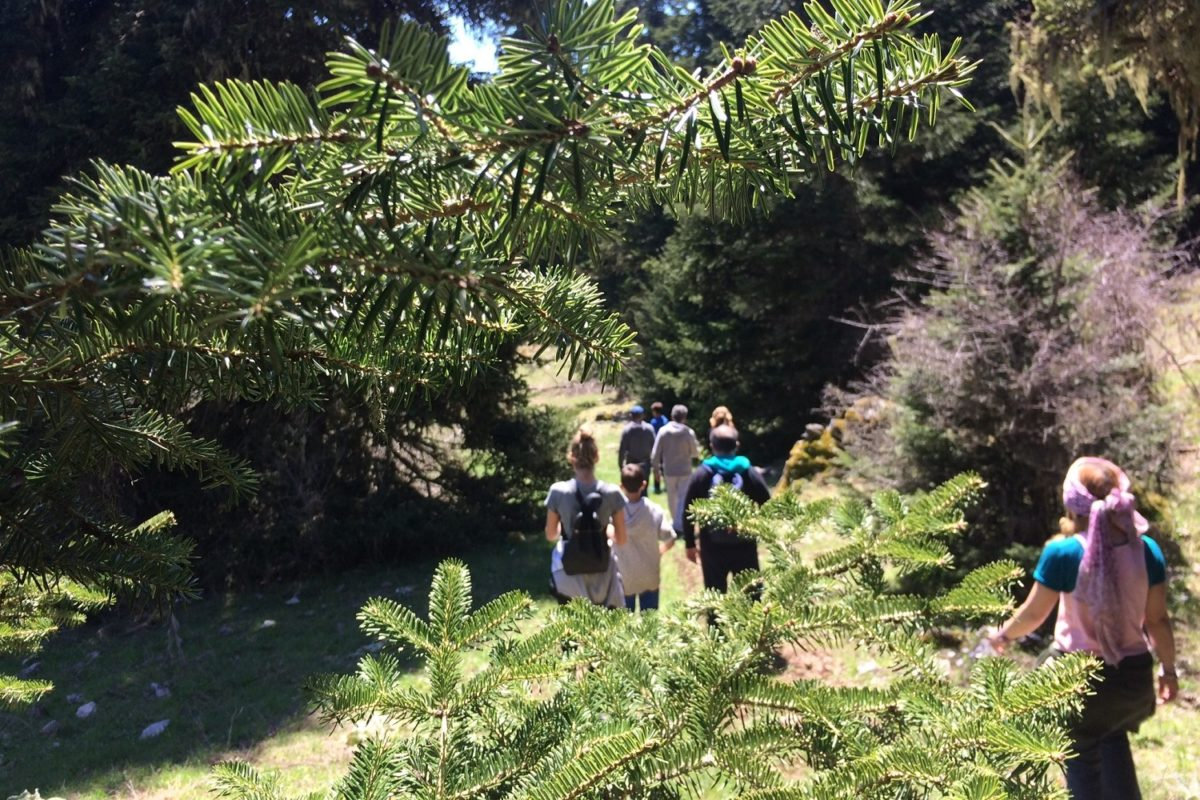 hiking parnassos families fir trees