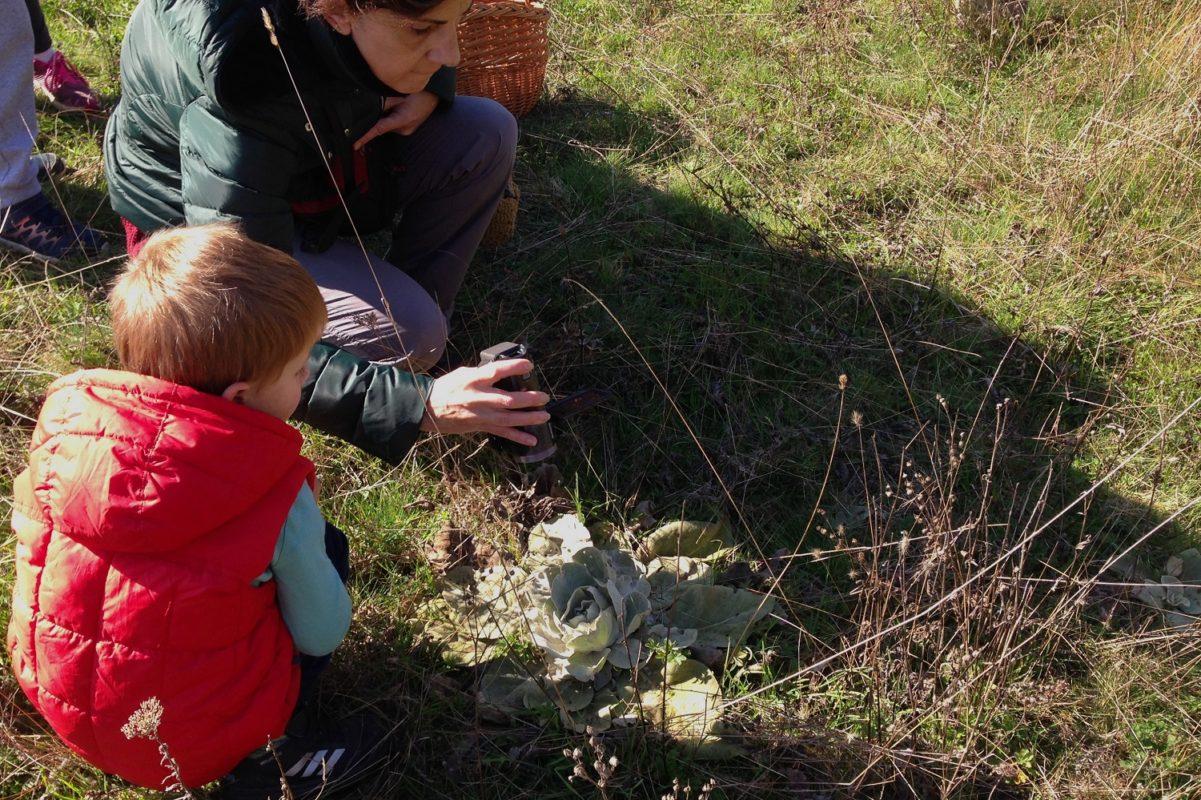 toddler parnassos flora