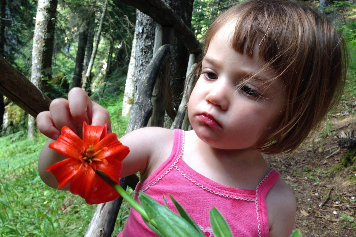 toddler parnassos flower
