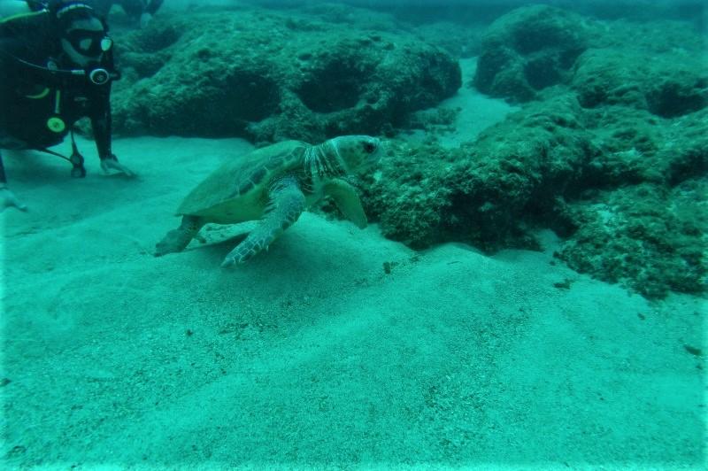 caretta crete diving greece
