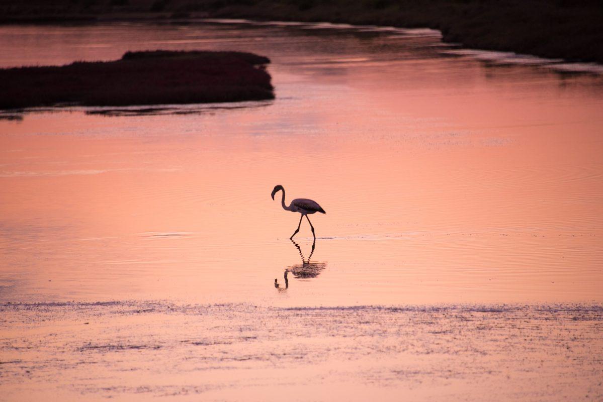 birdwatching yalova lagoon flamingo greece