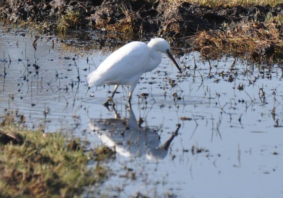 birdwatching northern greece