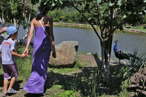botanical garden crete