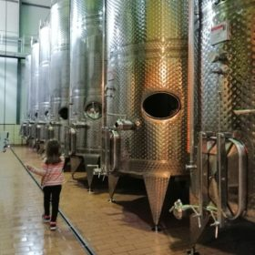 wine tour peloponnese kid