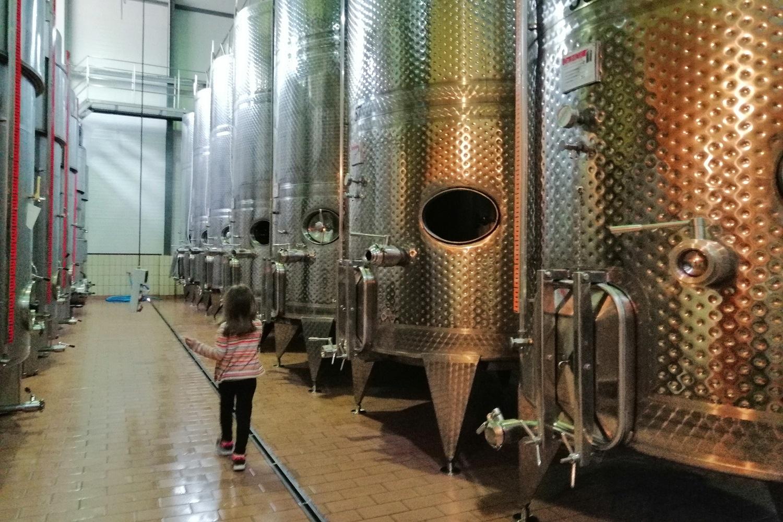wine tour peloponnese kid