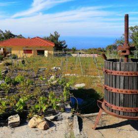 ikaria winery afiane greece