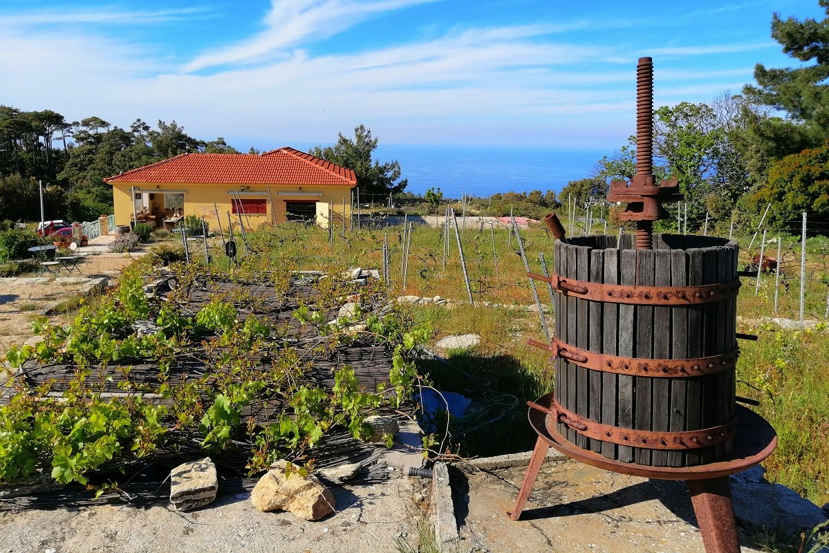 ikaria winery afiane greece