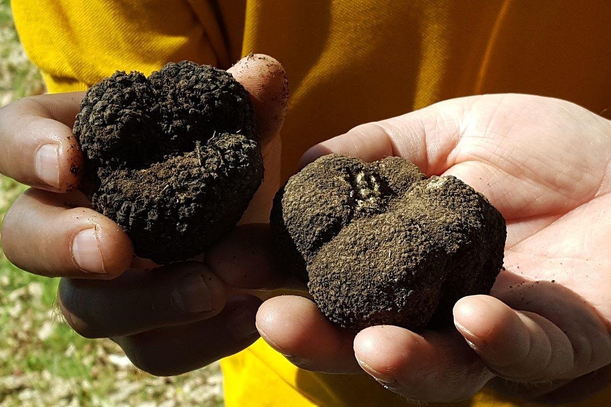 truffle hunting meteora