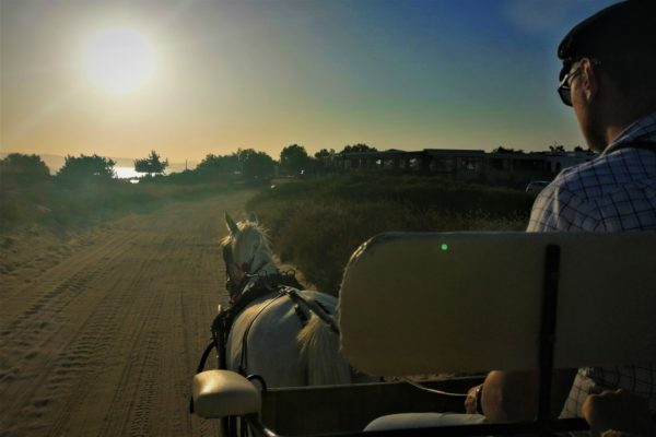 horse carriage naxos family