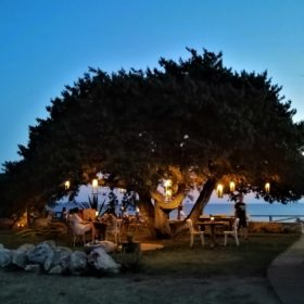 cedar plaka naxos restaurant for kids