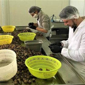 snails gastronomy tour with kids Peloponnese