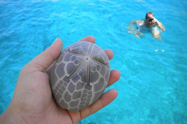 yachting sailing small cyclades seashell
