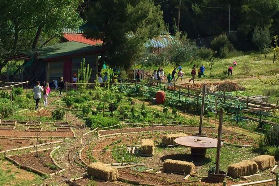 athens farm marathon seasonal activities (19)