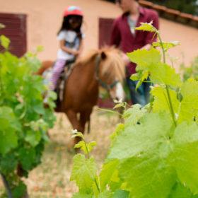 athens farm marathon pony riding