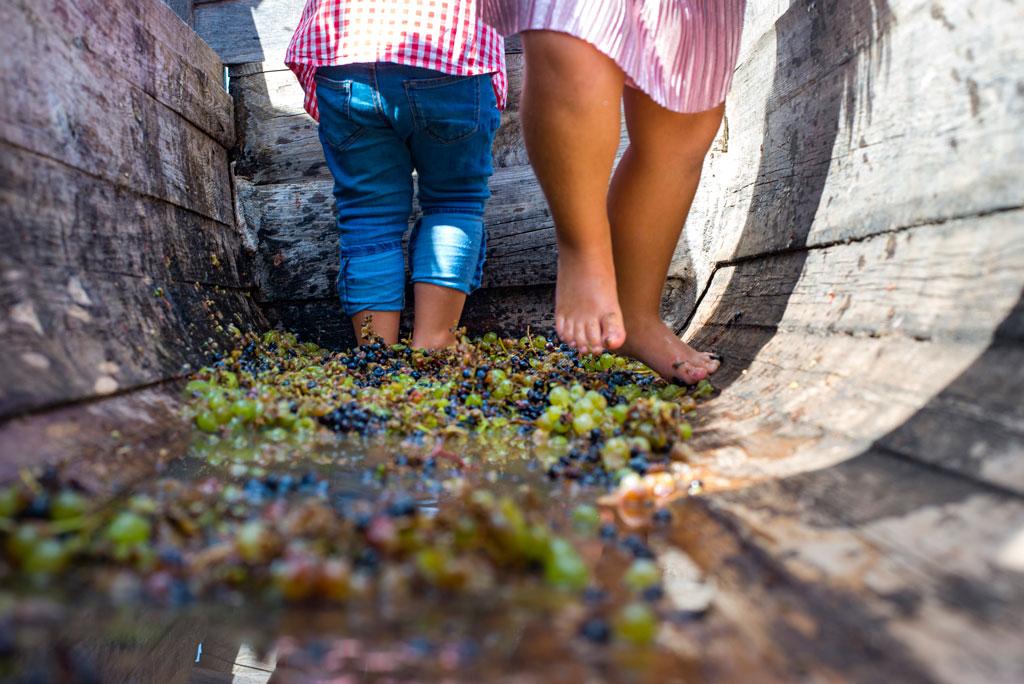 athens farm marathon grape wine
