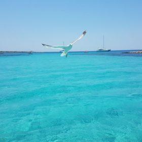 snorkeling sea cruise Cyclades