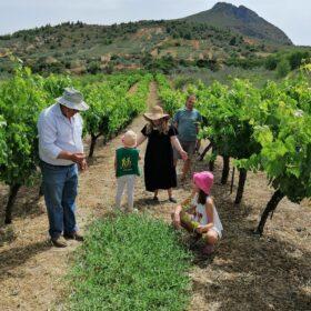 vineyards kids corinthia