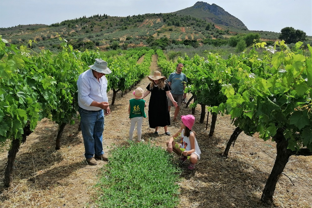 vineyards kids corinthia