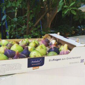 fruits food vegan corinthia